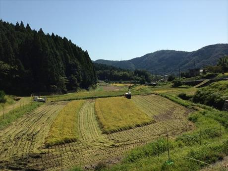 能勢米収穫