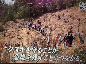 NHK菊炭04